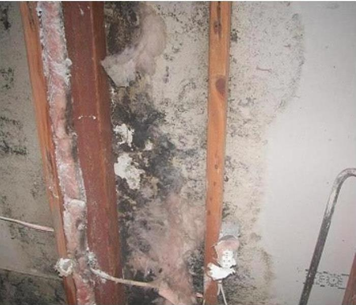 Mold Attacking a Residential Home in Albertville, AL Before